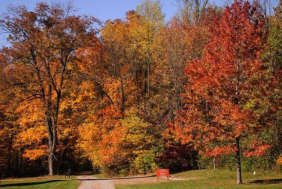 Hayes Arboretum