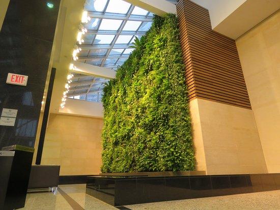 Calgary's +15 Skywalk : Huge green wall.