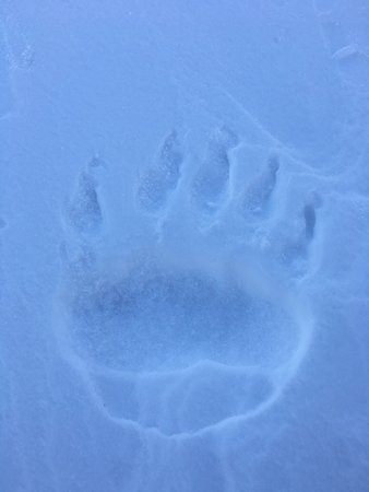 Spitzbergen Adventures: photo8.jpg