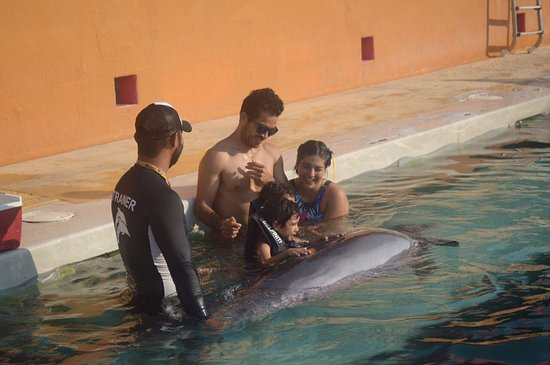 Delfiniti : Me encantooooo!! Fui con mi novio y sus sobrinitos y lo disfrutamos demasiado, el entrenador súp