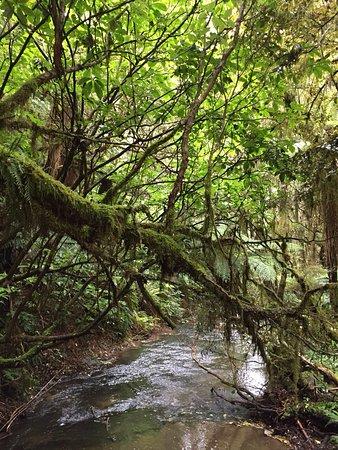 Owaka, Nya Zeeland: photo1.jpg