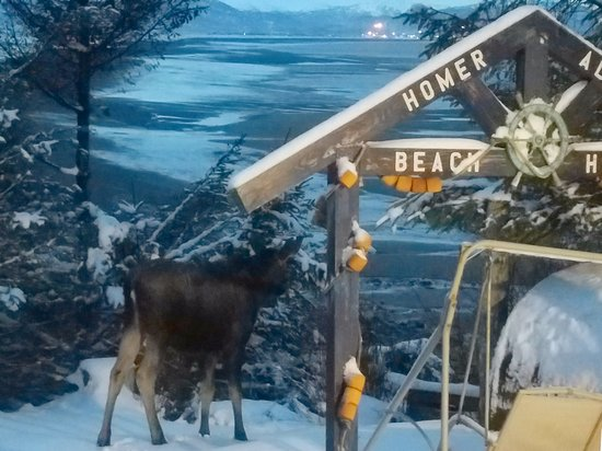 The Alaska Beach House: Even the moose stop to enjoy the view.