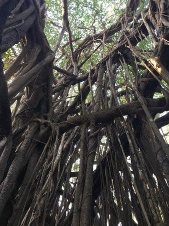 Banyan Tree Yoga Goa: photo3.jpg
