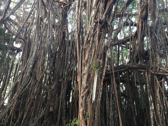 Banyan Tree Yoga Goa: photo4.jpg