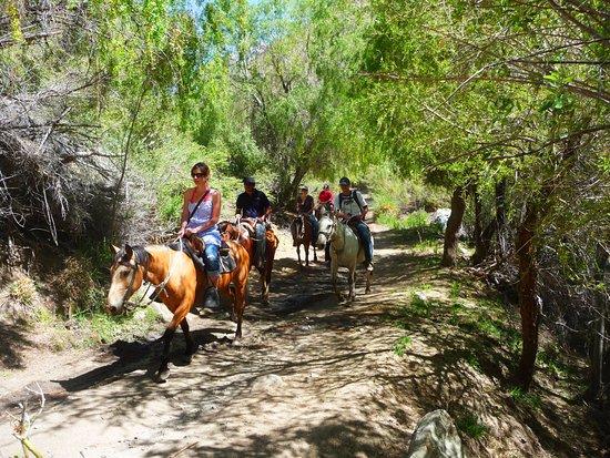 Pisco Elqui, Chile: Cabalgata al rio Cochiguaz