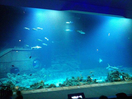 Tierpark Hagenbeck: Aquarium