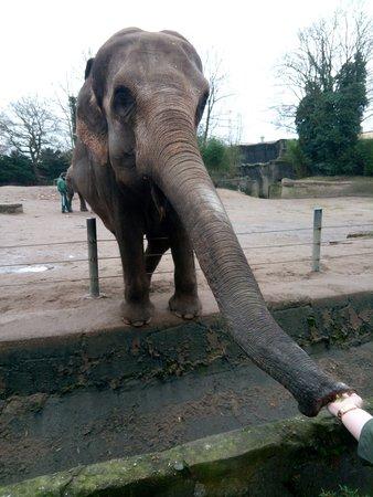 Tierpark Hagenbeck: Feeding the Elephants