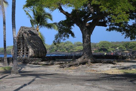 Honaunau, HI: Looking toward two-step