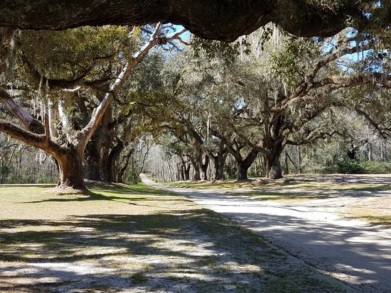 Mansfield Plantation: The allee of live oaks entraceway.