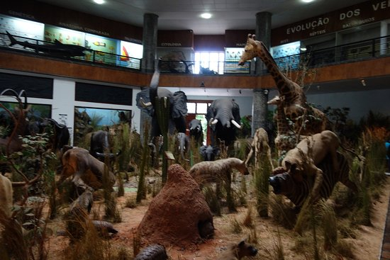 Inside the Natural History Museum, Maputo