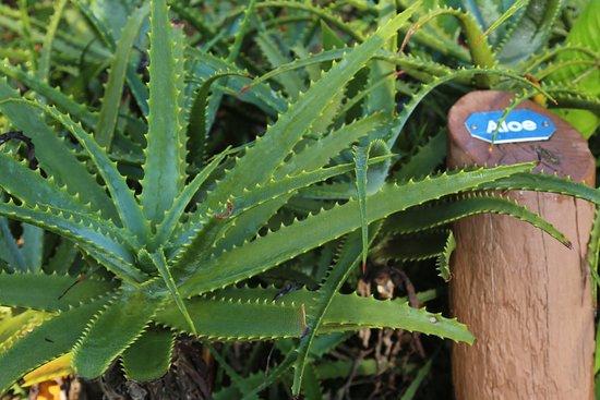 Keaau, Havaí: Nature trail behind the store