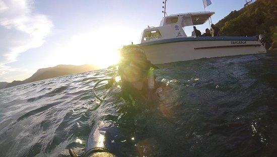 Waikawa, Nouvelle-Zélande : Second to last dive
