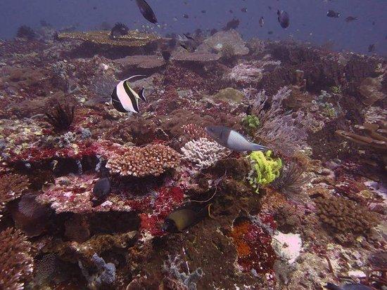 Blue Marlin Dive Gili Trawangan: FB_IMG_1489110666421_large.jpg