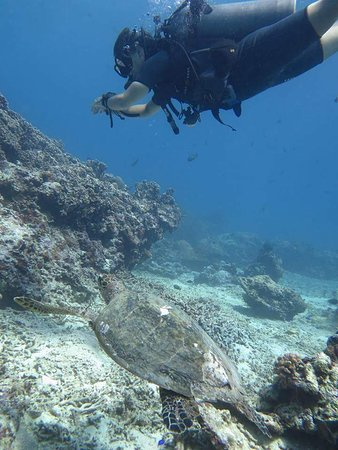 Blue Marlin Dive Gili Trawangan: FB_IMG_1489110659856_large.jpg