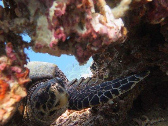 Blue Marlin Dive Gili Trawangan: FB_IMG_1489110663376_large.jpg