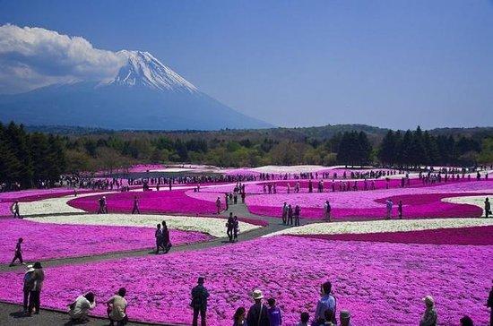 Pink Moss Phlox Festival and Mt. Fuji...