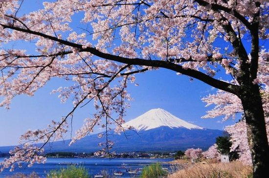 Cherry Blossom Tour from Tokyo: Odawara...