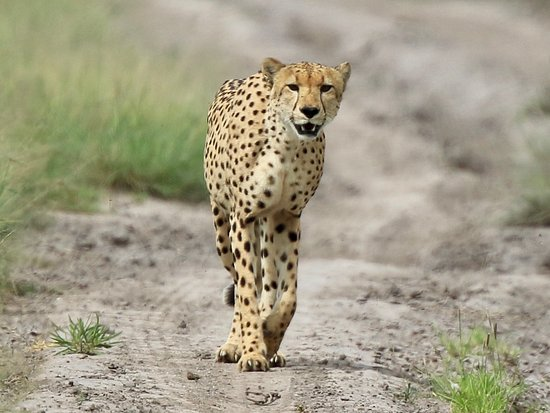 Central Kalahari Game Reserve-billede