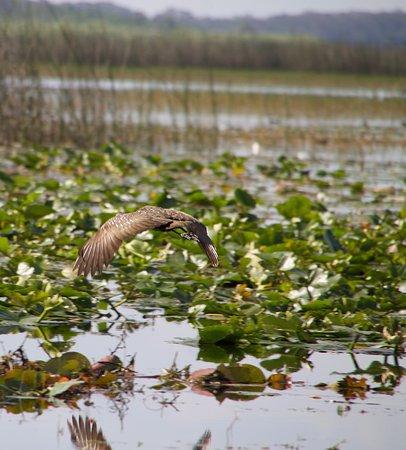 Kissimmee, FL: Marsh Landing Adventures