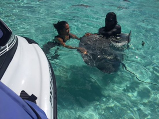 Moorea, Polinesia Francesa: Petting the sting rays with our tour guide
