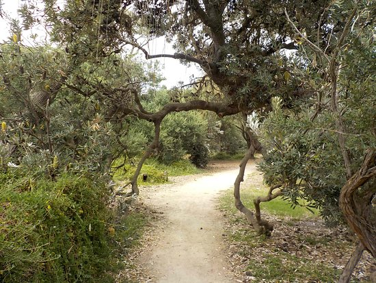 Seaford, Australien: Path overgrown with trees