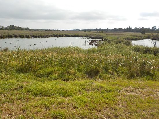 Seaford, Australia: Lake at Southern end of wetlands