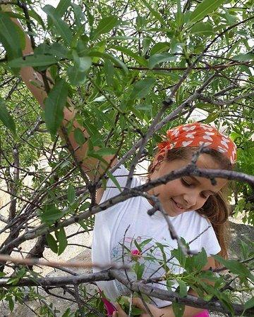 Mesudiye, Türkei: tsira otel