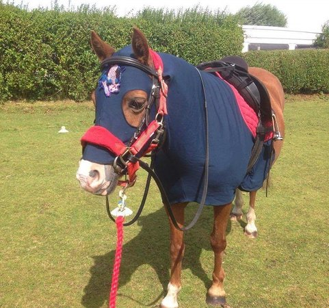 Meols, UK: Willow pony dressed up for spider man party !
