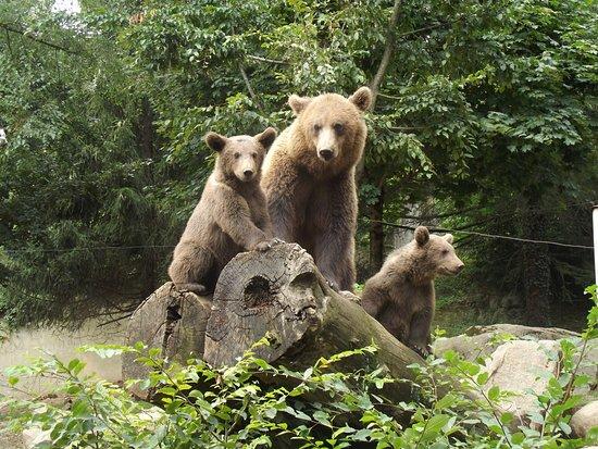 Arcizans-Avant, France: Les ours du Parc Animalier des Pyrénées
