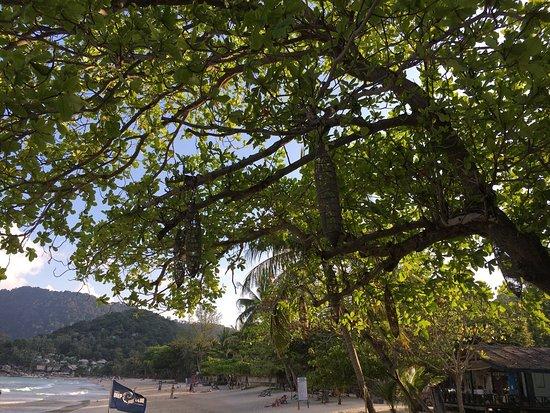 Thongtapan Resort