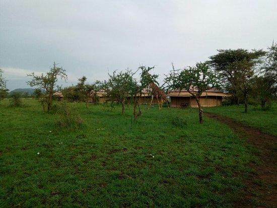 Serengeti Wildcamp Foto