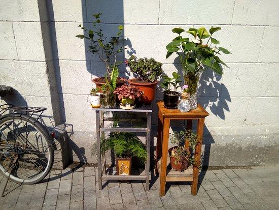 Noodle Walking Tours Shanghai: Hongkou, Gardening