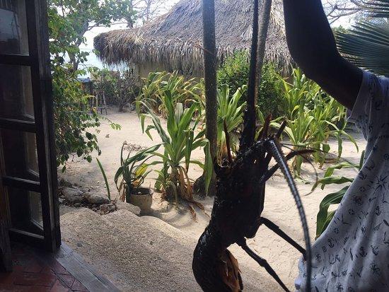 Isla del Pirata: ENTRADA DO RESTAURANTE