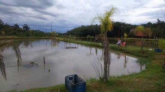 Altonia, PR : foto de alguns taques de peixe