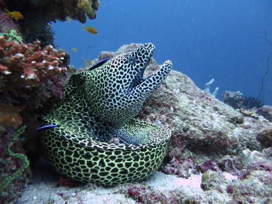 Adventure Diving: Honeycomb is my Friend whom I can pat while diving