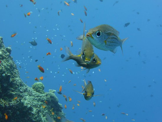 Adventure Diving: Full of life