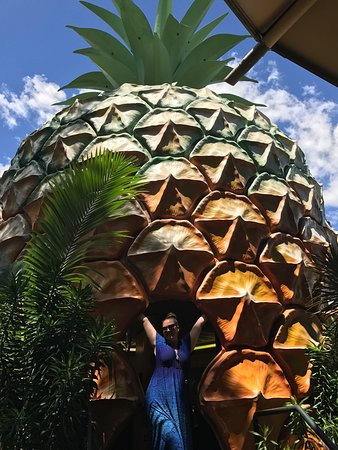 The Big Pineapple: photo1.jpg