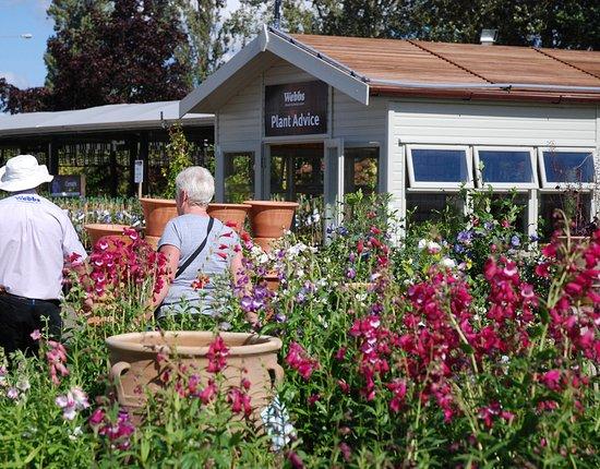 Webbs of Wychbold: Expert gardening advice, a 5 year hardy plant guarantee and wonderful range of seasonal plants