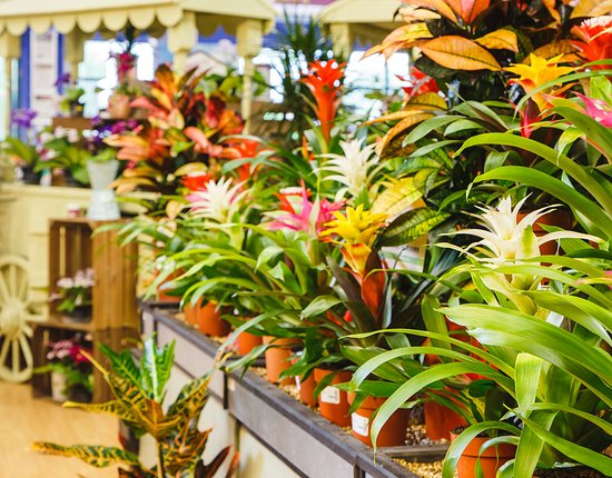 Webbs of Wychbold: Award-winning house plants, great gift wrapping service, cacti and succulents