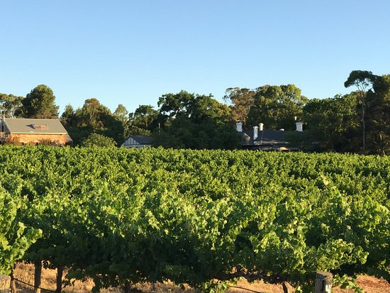 Angaston, Australia: Taken in December at Strathlyn Estate