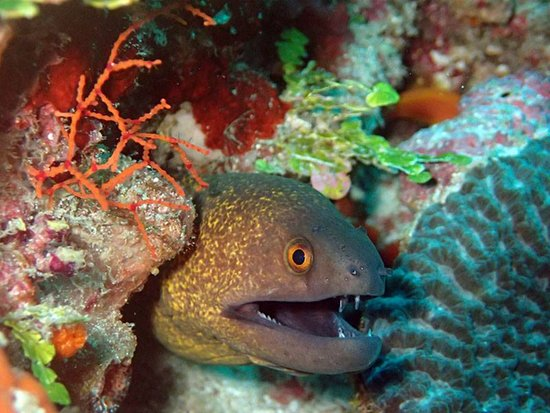 Adventure Diving: One of the daring eel