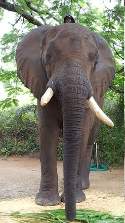 Elephant Whispers Photo