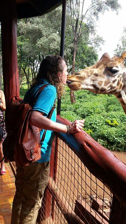 African Fund for Endangered Wildlife (Kenya) Ltd. - Giraffe Centre: Pucker up!