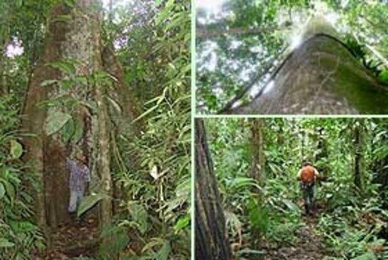 Hotel Atos: Turismo local, visita al Bosque Protector.