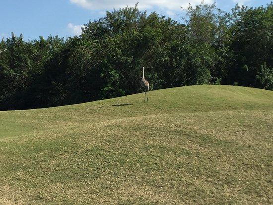Legacy Golf Club at Lakewood Ranch : Unusual birds to greet us