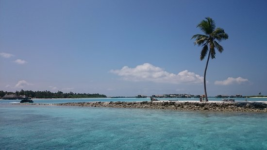 Gili Lankanfushi: One Palm - good snorkeling from here