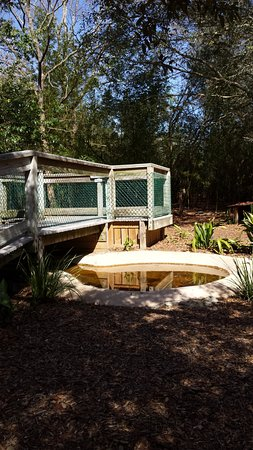 Emerald Coast Wildlife Refuge Zoological Park: Example of the pools in several of the enclosures. Habitats seem to be well though out &maintain