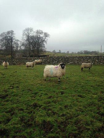 Ravenstonedale, UK: Local Sheep