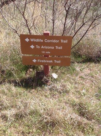 Oracle State Park: Nature Trail Loop