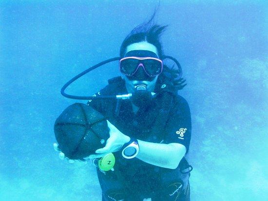 "TOPDIVE Bora Bora: ""shark pillow"" ?? It's in the star fish family"